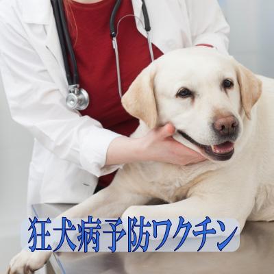 dog-vac-rabies