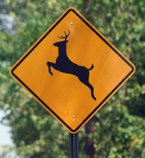 traffic-deer